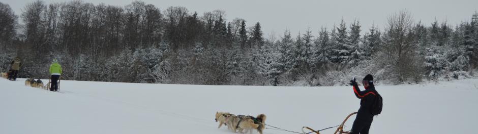 initiation en traineau à chien dans le Doubs, attelage de chiens de traineau dans le Doubs