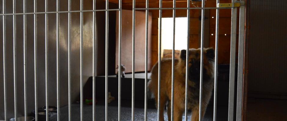 box intérieur pension canine de la Ferme sur la roche